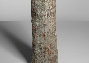 "Image of ""Ramifications I"" sculpture created by splitting tree trunks into sections and reassembling them with staples"